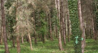 Terrain à bâtir – 771 m² boisé – Tout à l'égout – Proche commerces de Négrepelisse – REF 1159