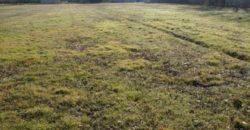 Terrain constructible – St Cirq – 5 km Caussade – 1,5 ha – REF 1483